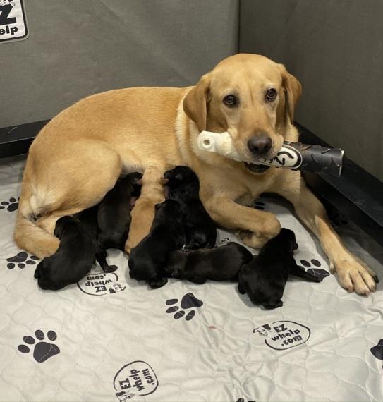 molly-pups